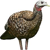 Avian X LCD Hen Breeder Turkey Decoy